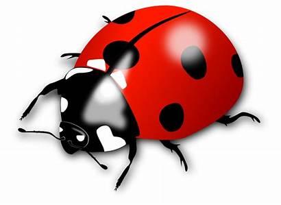 Clip Clipart Ladybird Transparent Ladybugs Leuke Onlinelabels