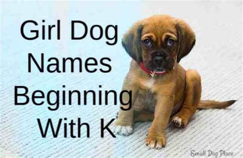 girl puppy names beginning