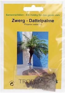 Zwerg Dattelpalme : tropica zwerg dattelpalme 25 korn bloomling deutschland ~ Eleganceandgraceweddings.com Haus und Dekorationen