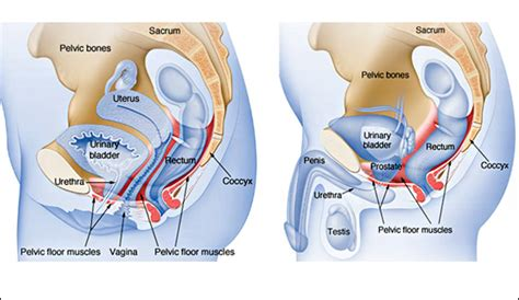 pelvic floor electrical stimulation prolapse carpet