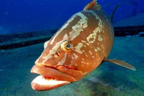 pez de boca grande