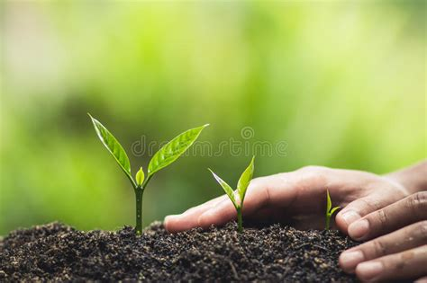 Plant, Tree, Planting, Life, Agriculture, Environment