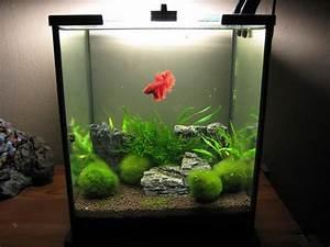 My Aquarium-scapes