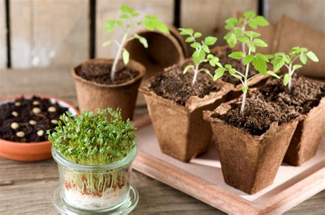 Windowsill Vegetable Garden by How To Grow A Windowsill Vegetable Garden Naylor