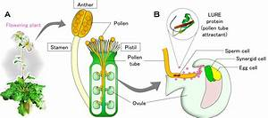 Unraveling the unknown receptors and mechanism for ...