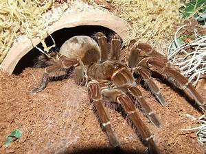 52 best images about Spiders on Pinterest   Giant spider ...
