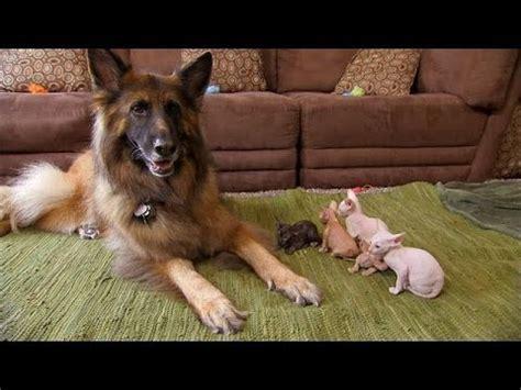 Five Cutest Animal Friendships   Too Cute! - YouTube
