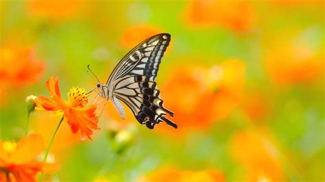 Butterfly Home Screen Wallpaper Images by Designing Wings Of Butterfly Photo Hd Wallpapers