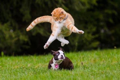 tierisches vergnuegen hund und katze beim wilden spiel