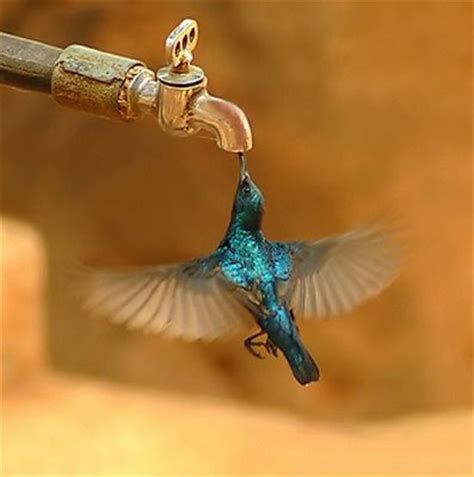 funny and crazy animal photos tiny bird drinks from tap photo