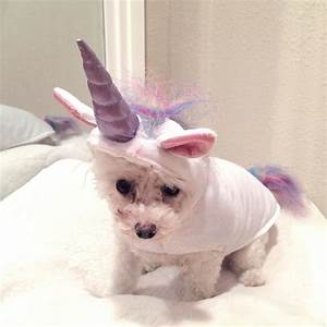 The Pictures For Unicorn Dog Costume Dog Beds and Costumes