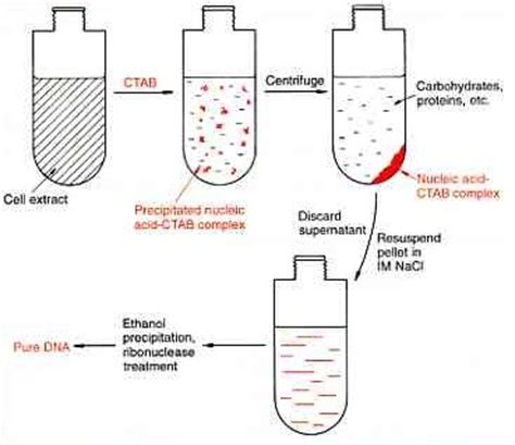 dna extraction methods for bacteria sle apa college essay