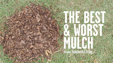 mulch garden the best and worst mulch for your garden southern living youtube
