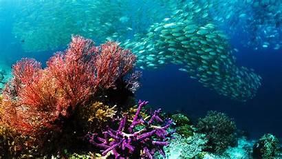 Underwater Ocean Pixelstalk