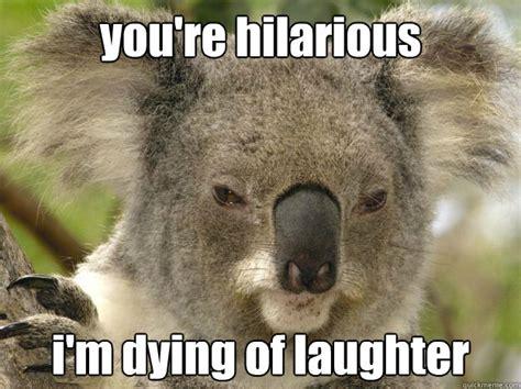 Angry Koala Meme - cdc hilarity occupy m e