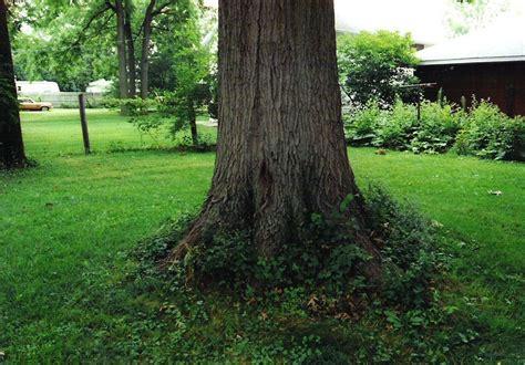 tree trunks trunks and trees on pinterest