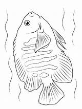 Coloring Pages Angelfish Fish Printable Recommended Mycoloring sketch template