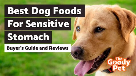 dog foods  sensitive stomachs august