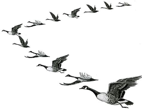 birds migrating clipart   cliparts  images