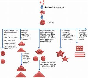 Schematic Diagram Representing Mechanism Of Formation Of