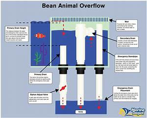 Bean Animal Overflow The Bean Animal Drain Is A Hybrid Version Of The Durso And The Herbie Drain