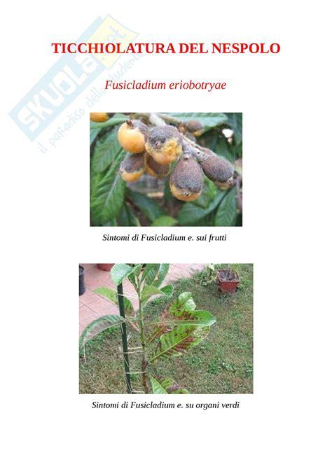 https://www.skuola.net/universita/esercitazioni/ticchiolatura-del-nespolo-fusicladium-eriobotryae-erbario-fitopatologico