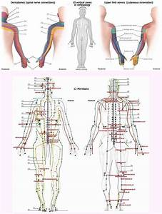 Reflexology Foot Chart Back Hand Reflexology Zones Dermatomes Nerves Meridians