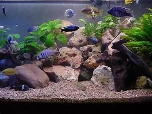 Idee Decoration Aquarium : visite guid e ~ Melissatoandfro.com Idées de Décoration