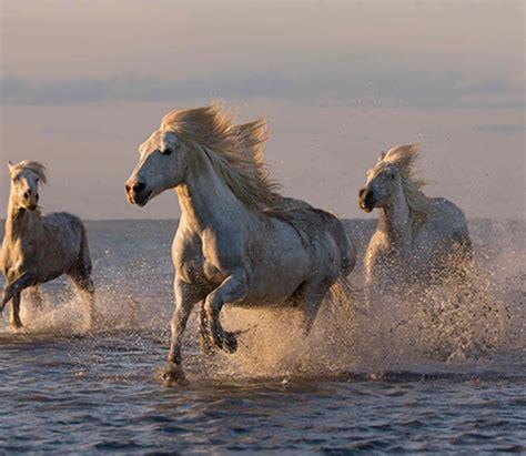 majestic horse popular credit