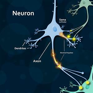 Brain Education