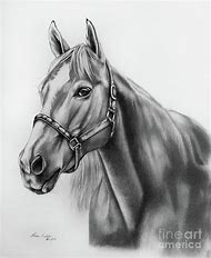 Horse Pencil Portrait Drawings