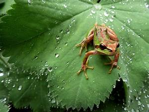 7 Awesome Frog Species Of Canada And The United States