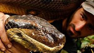 Discovery Channel  Now With More Facts  Fewer Snakes Eating Humans  U2013 Mother Jones