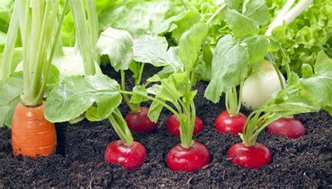 Gemüse Im Balkonkasten by Biogarten Auf Dem Balkon