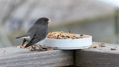 top 28 ontario winter birds ontario birds and herps