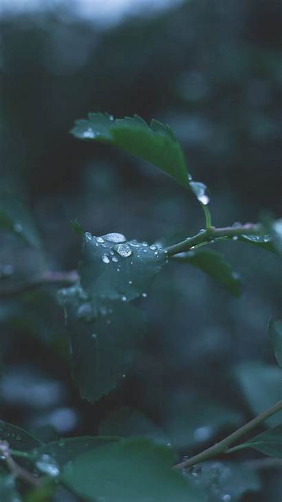 Rain Nature Android Water Wallpapers Leaf Iphone