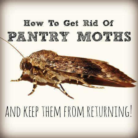 Getting Rid Of Pantry Moths Naturally Here S How To Get Rid Of Pantry Moths That Infested