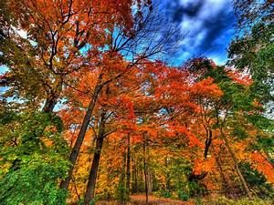 Autumn, Trees, Nature, Landscape, Leaf, Leaves, Wallpapers, Hd, Desktop, And, Mobile, Backgrounds