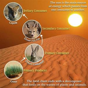 A Bird's Eye View of the Desert Food Chain