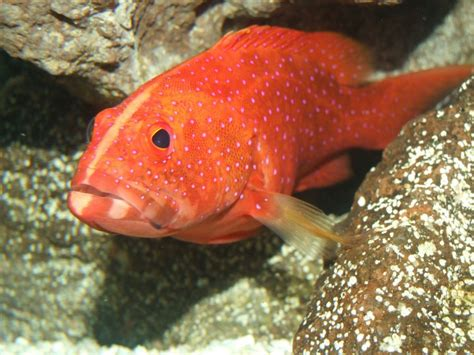 fish grouper underwater expensive most cute miniatus fishing florida saltwater tropical tank water bass ocean groupers lure dirty guide minute