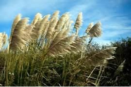 Plants In The Grasslan...