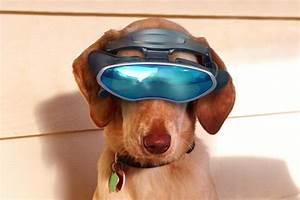 High Tech Gadget : 10 high tech gadgets to pamper your pet ~ Nature-et-papiers.com Idées de Décoration