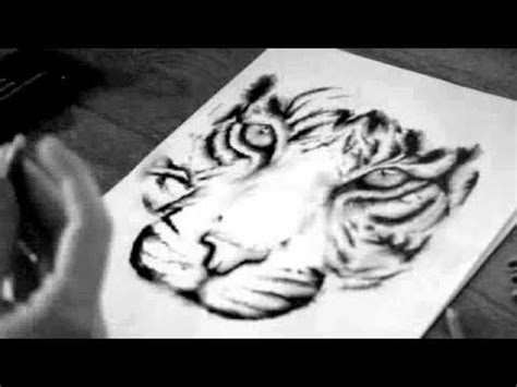 time lapse  basic white tiger drawing youtube
