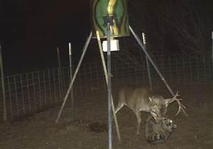 Woodwork Deer Feeder Plans Projects PDF Plans