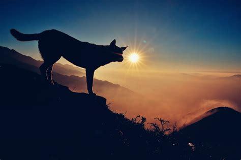 fotos gratis horizonte silueta montana ligero cielo
