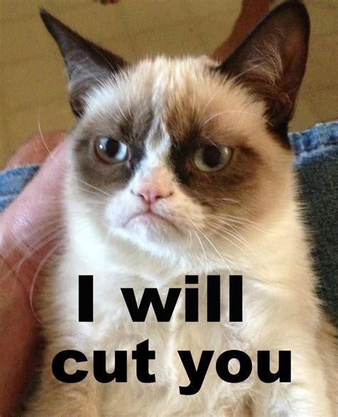 Grumpy cat  I will cut you   Grumpy Cat   Pinterest   I will