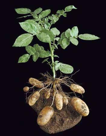 science perkembangbiakan tumbuhan