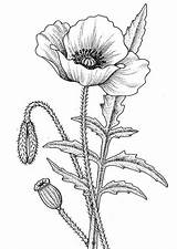 Flower Drawing Coloring Awesome Flowers sketch template