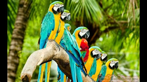parrot wallpapers    colorful birds hd