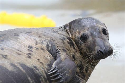 Seal  Detroit Zoo